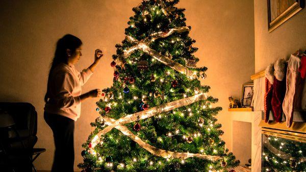 Aus dem Topf in den Garten: Das sollten Sie beim Umpflanzen des Weihnachtsbaums beachten