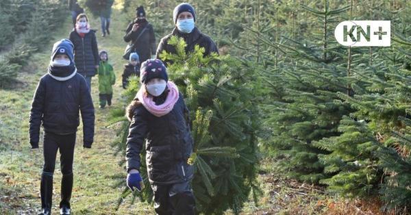 Verkauf von Weihnachtsbäumen geht auch unter Corona weiter