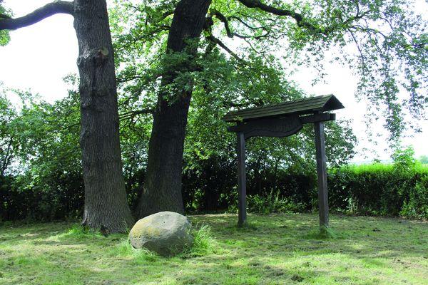 Die Delmer Eichen sind Erinnerungsort und Naturdenkmal (Foto: Nico Herzog)
