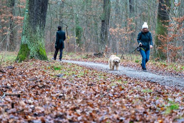 Spaziergehen bleibt erlaubt - Potsdamer Stadtführer empfehlen schöne Routen. Foto: Varvara Smirnova