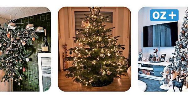 Schönster Weihnachtsbaum in MV gesucht: Das sind die zwölf Finalisten