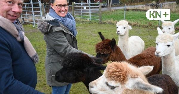 Zucht in Fargau-Pratjau: Alpakas veränderten ihr Leben