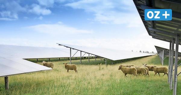 So soll der neue Solarpark in Grimmen aussehen