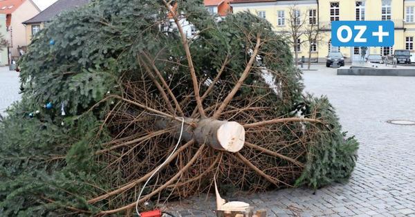 """Ribnitzer Weihnachtstanne auf dem Markt abgesägt: """"Was geht in solchen Menschen vor?"""""""