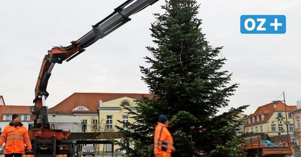 Nach Vandalismus: Ribnitzer Weihnachtstanne steht wieder