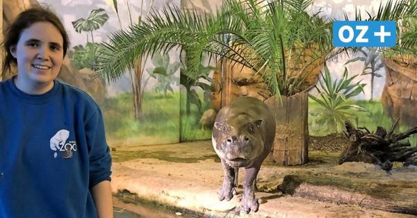 Rostocker Zoo im Lockdown: Wie vertragen die Tiere die Einsamkeit?
