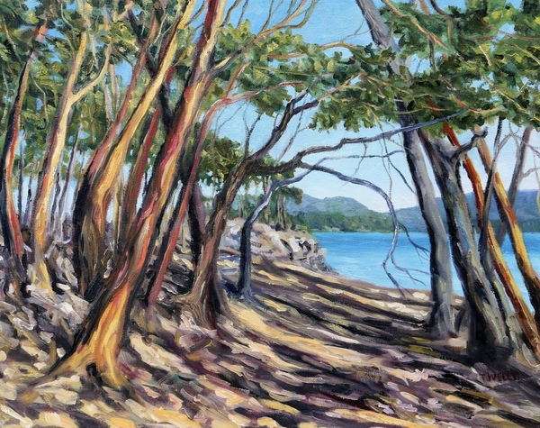 Arbutus Grove East by Terrill Welch oil on canvas, 16 x 20 inches - In Private Collection.