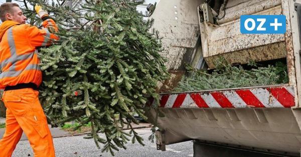 So läuft die Entsorgung des Tannenbaums im Landkreis Rostock