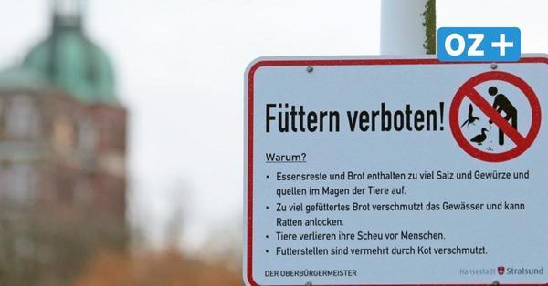 5000 Euro Bußgeld: Hier gilt in Stralsund jetzt ein Fütterungsverbot