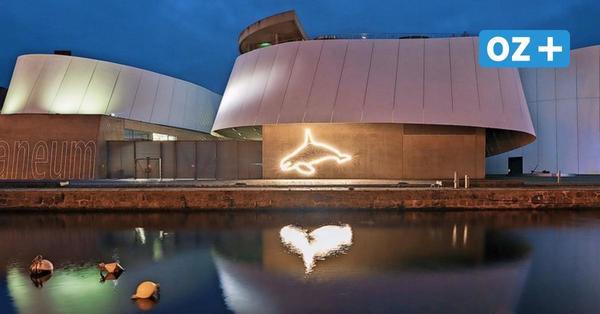 Deutsches Meeresmuseum Stralsund: Schätze sollen 2021 digitalisiert werden