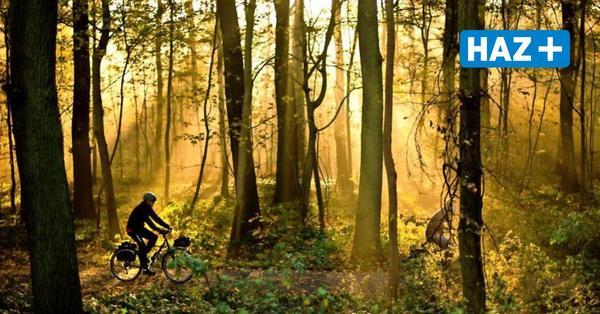 Forstbetrieb pflanzt 2000 Eichen in Hannovers Wäldern