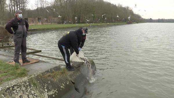 Les poissons peuvent à nouveau nager en toute sécurité dans l'Escaut - Vissen kunnen weer veilig in de Schelde zwemmen