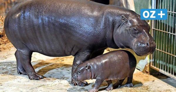 """Rostocker Zooverein wird 30: """"Haben den Zoo einmal komplett umgewälzt"""""""