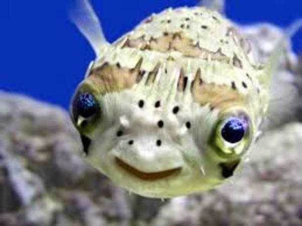 Happy fish is happy.