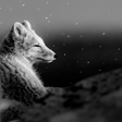 The 'arctic fox' model of software delivery