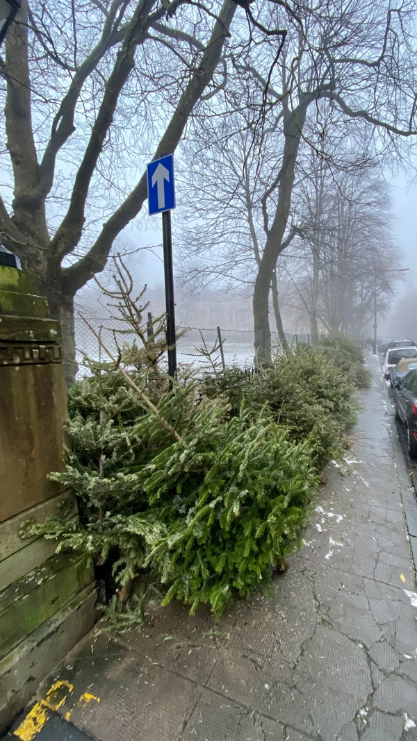 Discarded trees line the pavement in Dowanhill