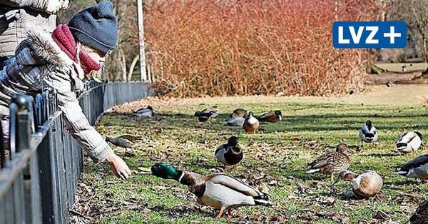 Enten füttern verboten: Brot und Brötchen sind Gift für wilde Wasservögel und Gewässer