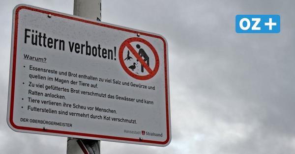 Greifswald: Tierschutzpartei will Füttern von Vögeln verbieten