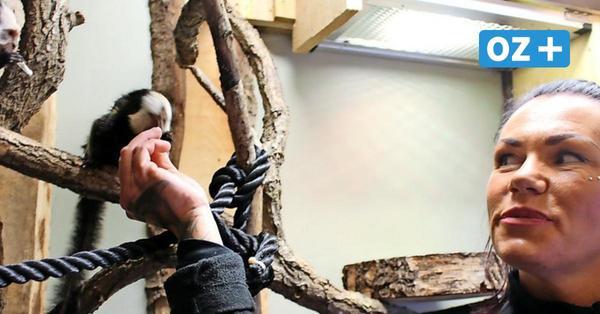 Usedom: Tierisch süßer Nachwuchs in Deutschlands kleinstem Zoo