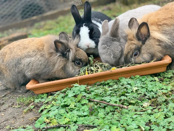 Das sind die Flauschhoppler: Bailey, Felix, Peppi und Cookie (von links). Foto: privat