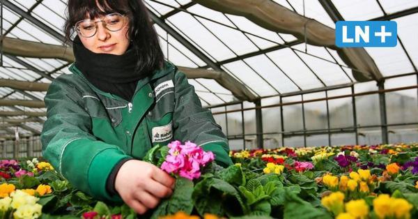 Lockdown in Ostholstein: Gärtnereien werden Primeln nicht los