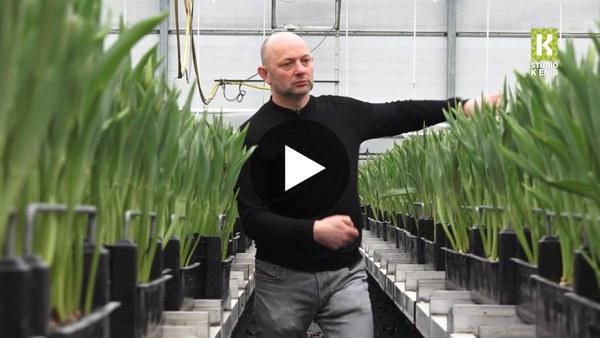 ROELOFARENDSVEEN - 'Zet je huis vol tulpen, dan komt de vrolijkheid vanzelf weer terug' (video)