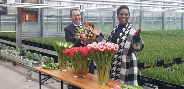 Tulpendag: Tulpen.nl vernoemt tulp naar Edsilia Rombley: Tulipa Edsilia
