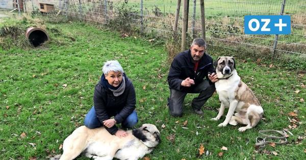 Wismar: Bewohner helfen Tieren und Menschen in Not mit Pfandbons