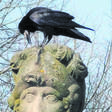 Bad Bramstedt: Die Krähenhochburg in Schleswig-Holstein
