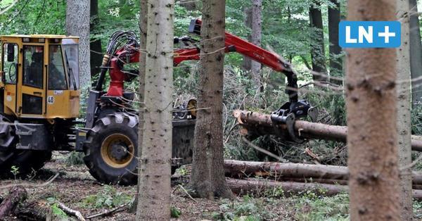 So geht es dem Wald im Herzogtum Lauenburg
