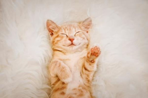 This kitten knows what it means to be fully alive.