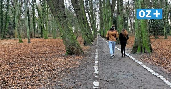 Buddelnde Hunde im Rostocker Lindenpark: Gibt es dort ein Mäuseproblem?