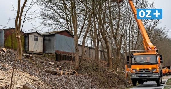 Baumfällarbeiten auf dem Zentralfriedhof und am Ostseeküstenradweg in Stralsund