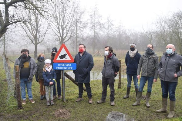 Les mares d'amphibiens d'Ypres prêtes pour la migration annuelle des crapauds - Amfibiënpoelen Ieper klaar voor jaarlijkse paddentrek