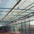 Glastuinders tonen meer belangstelling voor led