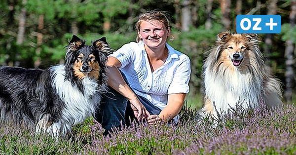 Hundezentrum in Rambin auf Rügen geplant: Was TV-Star Martin Rütter damit zu tun hat
