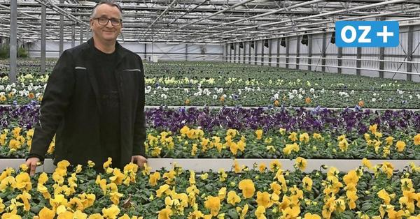 Grimmen: So bunt blüht der Frühling schon im Gewächshaus
