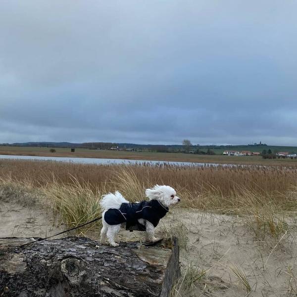 Windhund (Foto: Lilly Krüger)