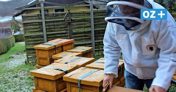 Usedom: Der Honig von Imker Wilke geht bis nach Gran Canaria