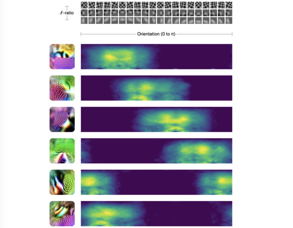 Synthetic tuning curves: responses of six high-low frequency detectors to artificial stimuli. (Schubert et al., 2021)