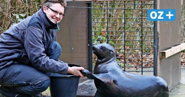 Umzugsplanung läuft: Wann Rostocks Robben den Zoo verlassen müssen