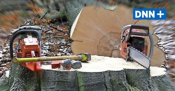 Warum es im Stadtrat Dresden Zoff um Baumschutz gibt