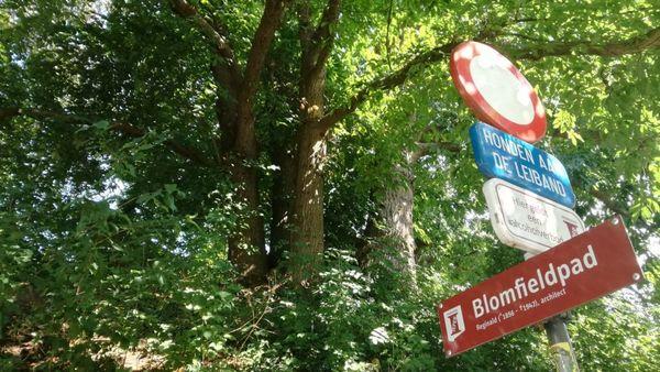 L'arbre d'Ypres est finaliste européen de l'Arbre de l'année  - Ieperse boom is Europese finalist 'Boom van het Jaar'