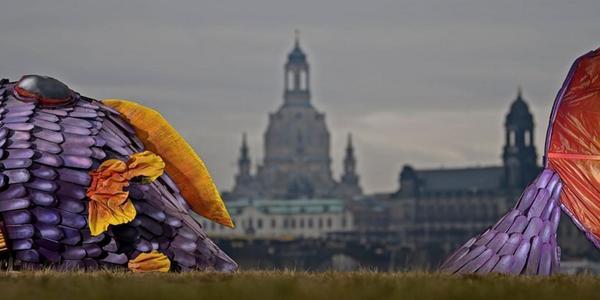 Stadt Dresden sucht Schöpfer des Monsterfisches