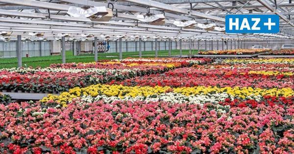 Niedersachsen will Blumenverkauf ermöglichen