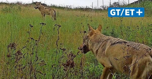 Forscher der Uni Göttingen untersuchen Wildtierverhalten bei Menscheneinfluss