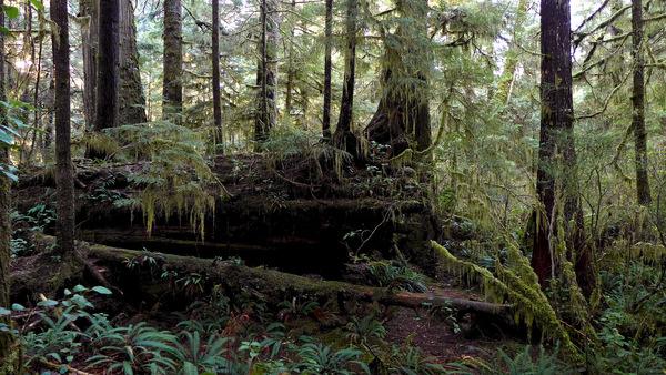 A Nurse Log - an ecosystem of transition