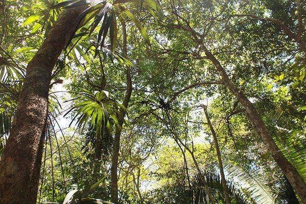 Guatemala: Selva maya pierde 546 mil hectáreas.