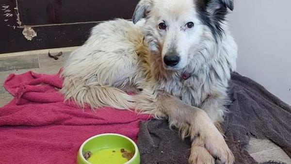 Ängstlicher Hund nach 75 Tage langer Odyssee eingefangen