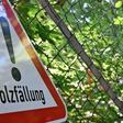 Gasleitung wird erneuert: Firma fällt Bäume bei Kleingärten